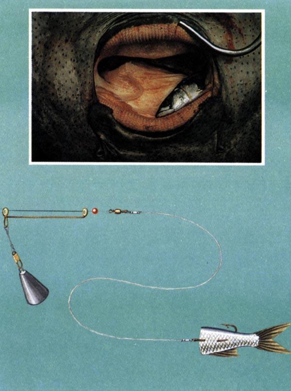 одежда оснастка для рыбалки