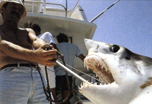 ловля акул ютуб