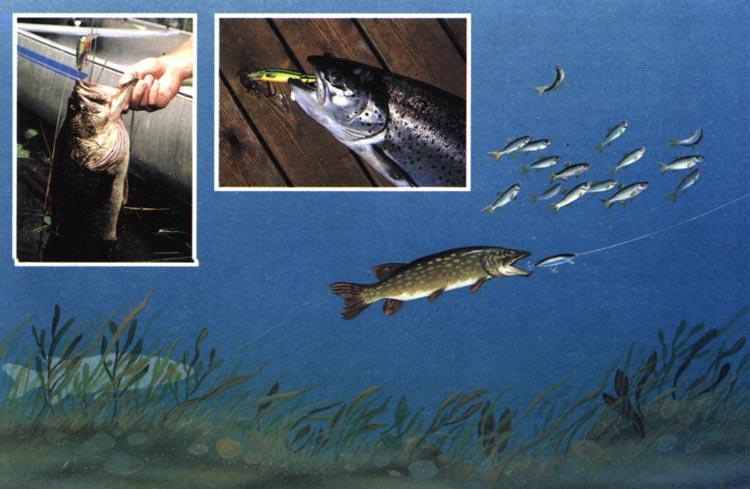 пища приманка для рыбы